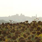 «Неспешная прогулка» по Италии